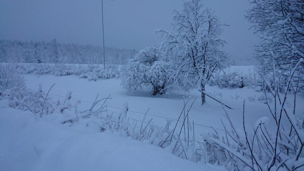 Mycket snö i dagarna